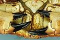 Cancer pagurus - Crabe dormeur - Tourteau - 015.jpg