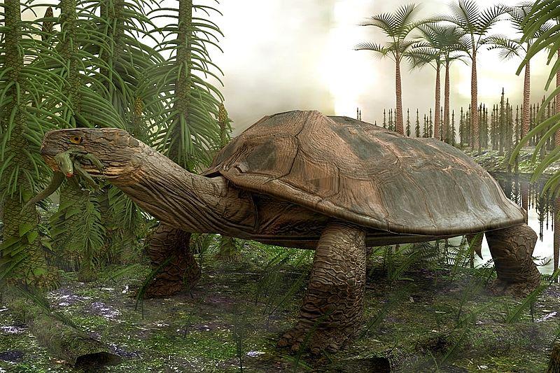 Ditemukan Kura kura Purba Berukuran Sebesar Mobil