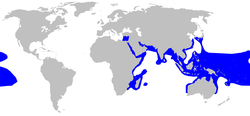 World map with blue shading around the periphery of the Indian Ocean extending into the eastern Mediterranean Sea, in the western Pacific from southern China to Indonesia to northern Australia, and over a large patch of the central Pacific