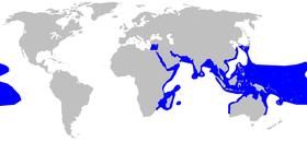 Rango del tiburón punta negra