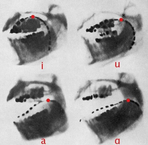 Cardinal vowels-Jones x-ray