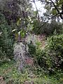 Carthagethermes 18.jpg