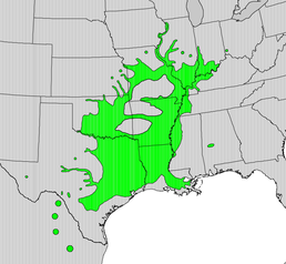 Carya illinoinensis map.png