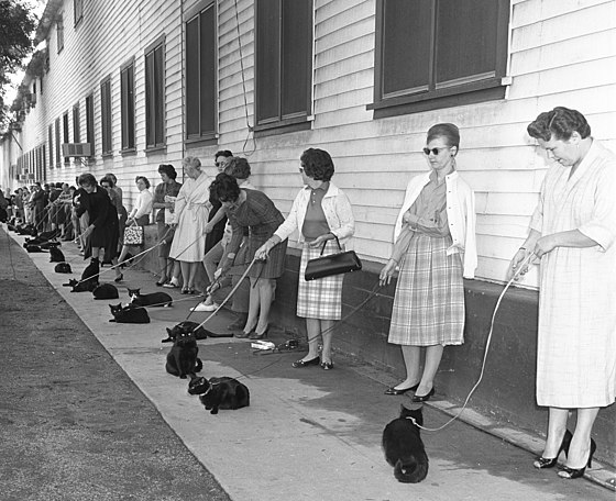 Casting black cats in 1961.jpg