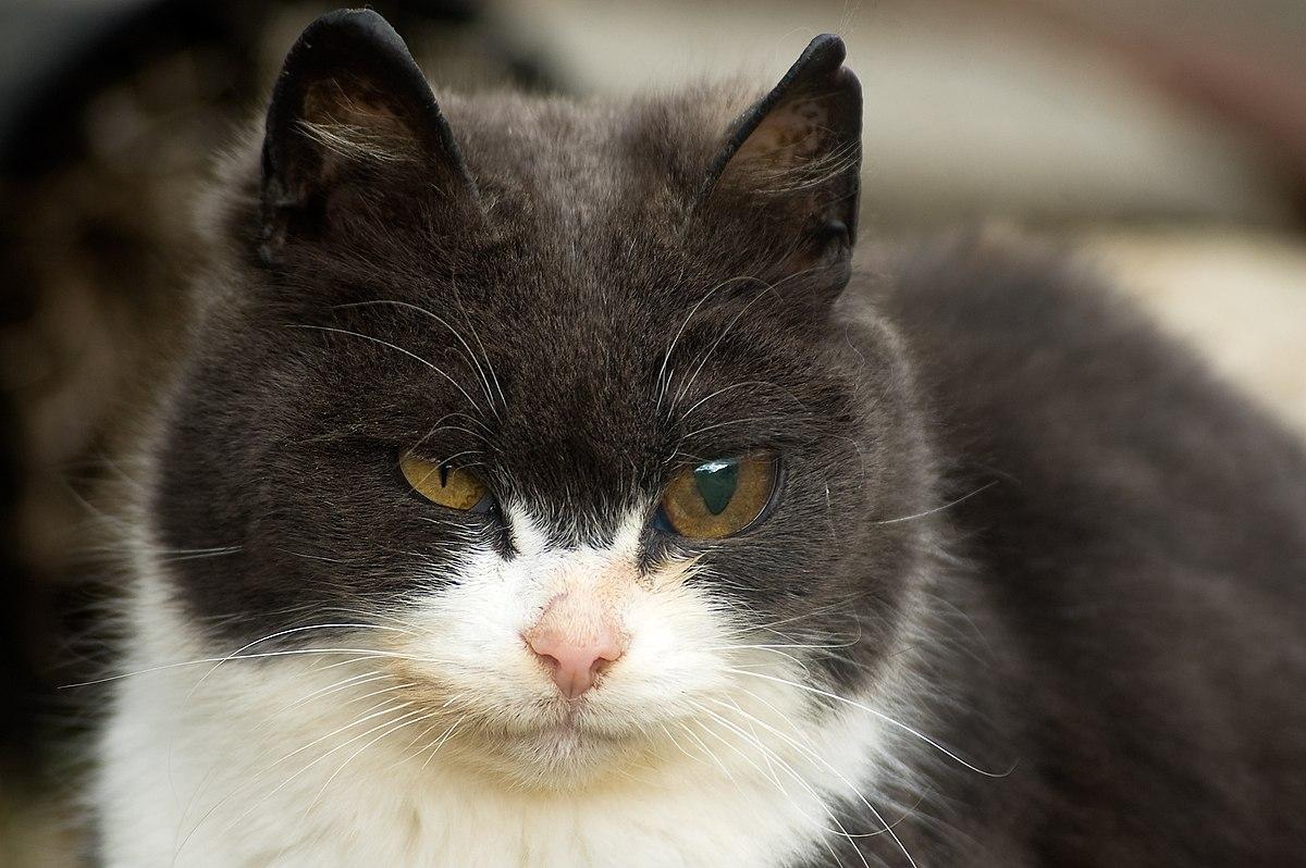 Cat S Eyes Episode  Youtube En Fran Ef Bf Bdais