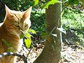 Cat Stare.jpg