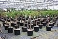 Centre horticole de la Ville de Paris a Rungis 2011 108.jpg