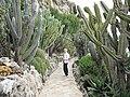 Cereus Monaco2.jpg