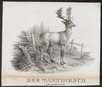 Cervus dama - 1700-1880 - Print - Iconographia Zoologica - Special Collections University of Amsterdam - UBA01 IZ21500146.tif