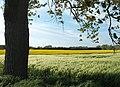 Champs le long de l'Aa - panoramio.jpg
