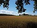 Champs près de Bois-Bougy - panoramio.jpg