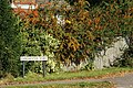 Chichester Road Pyracanthas - geograph.org.uk - 1502995.jpg