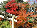 Chyogosonshi-ji torii.jpg