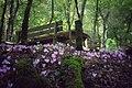 Ciclamini e bosco Luceto.jpg