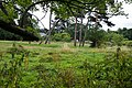 Clay Hill House Grounds - geograph.org.uk - 1988229.jpg