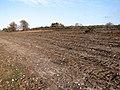 Cleared heathland in Kelling Heath - geograph.org.uk - 1749235.jpg