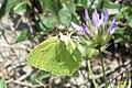 Cleopatra (Olive grove MakGi) (35143540543).jpg