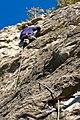Climbing quickdraws.jpg