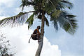 Coconut (1).jpg