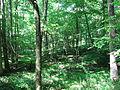 Company Mill Trail Umstead NC SP 0059 (3582964167).jpg