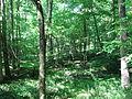 Company Mill Trail Umstead NC SP 0059 (3582964167).jpg
