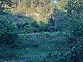 Coon Creek Missouri (48740539387).jpg