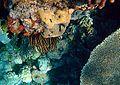 Coral reefs 1.JPG
