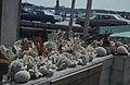 Coral stall, Nassau (38154683744).jpg