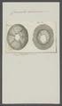 Coronula balaenaris - - Print - Iconographia Zoologica - Special Collections University of Amsterdam - UBAINV0274 101 02 0034.tif