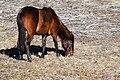 Cracker horse 1.jpg