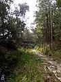 Creek bed, looking north - panoramio.jpg