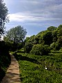 Creswell Gorge, Creswell Craggs, Notts (68).jpg
