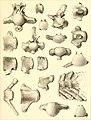 Cretaceous reptiles of the United States (1865) (20524328249).jpg