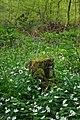 Crowsheath Stump - geograph.org.uk - 1253532.jpg