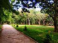 Cubbon Park.jpg
