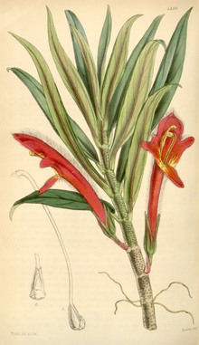 Curtis's Botanical Magazine, Plate 4330 (Volume 73, 1847).png