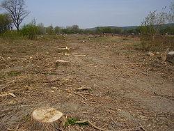danger sur  la foret  francaise   250px-Cutted_trees_slovakia