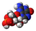 Cyclic-guanosine-monophosphate-3D-spacefill.png