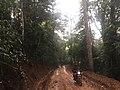 Cycling along Mabira Forest.jpg