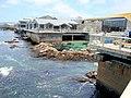 DSC28350, Monterey Bay Aquarium, California, USA (5381781618).jpg