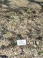 Danthonia decumbens - Botanischer Garten München-Nymphenburg - DSC07859.JPG