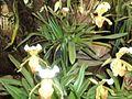 Dargeeling garden. jpg.jpg