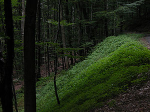 deep in the forest, St.Ingbert, Germany, Steinkopf
