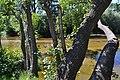 Desde la orilla de Villa del Prado.jpg