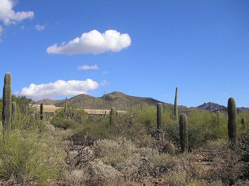 Desertmuseum06 1