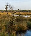 Diakonievene. Natuurgebied van It Fryske Gea 18.jpg