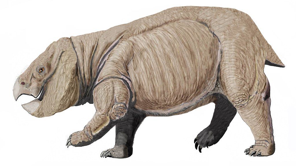 Dicynodont from Poland