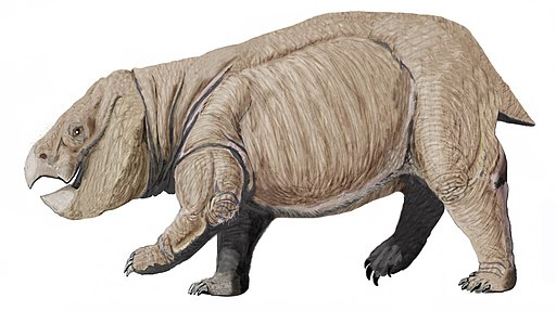 Dicynodont from PolandDB