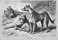 Die Gartenlaube (1875) b 685.jpg
