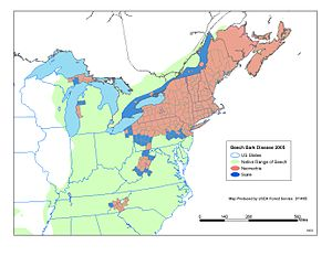 Beech bark disease - Distribution map of American Beech and the beech scale insect.